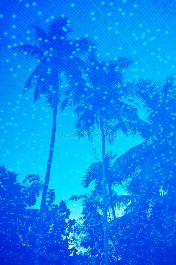 Blauw water van toevlucht zwembad met palmenbezinning royalty-vrije stock foto