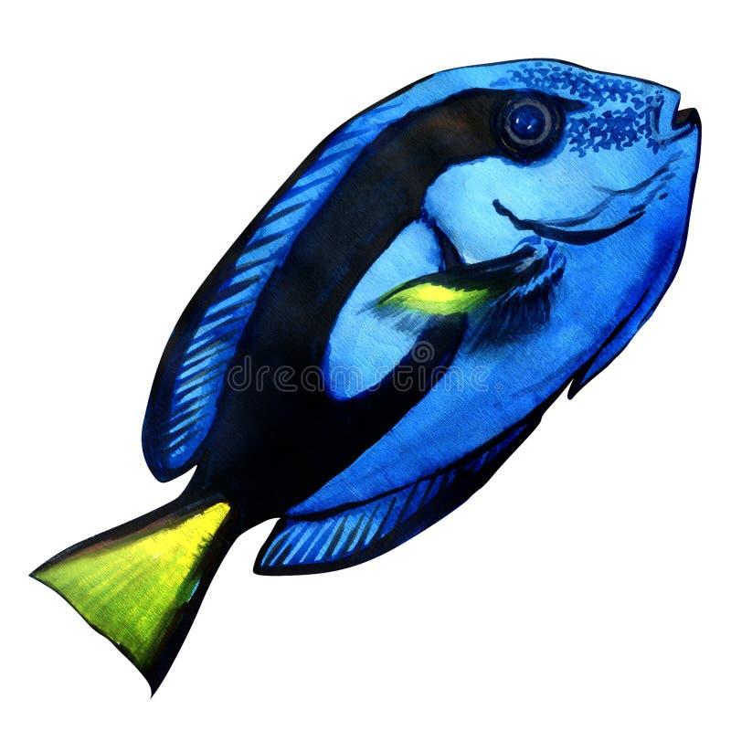 Blauw zweempje, mariene die koraalvissen op wit worden geïsoleerd vector illustratie