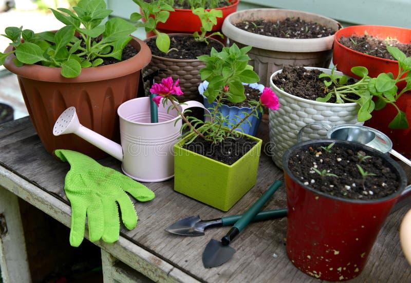 Blauwbloemen in potten met handschoenen en gereedschap voor het bewerken van tuintafel stock foto