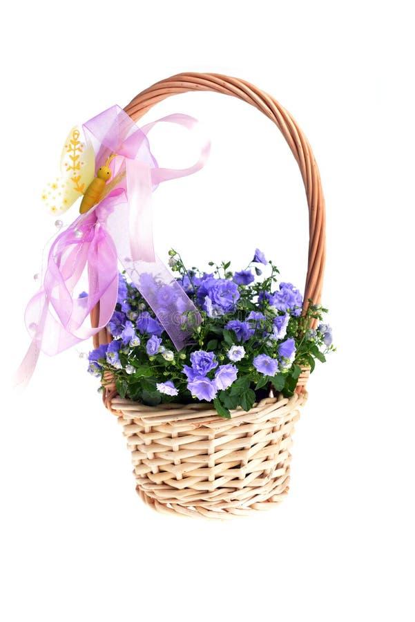 Blauwe bellflowers stock afbeelding