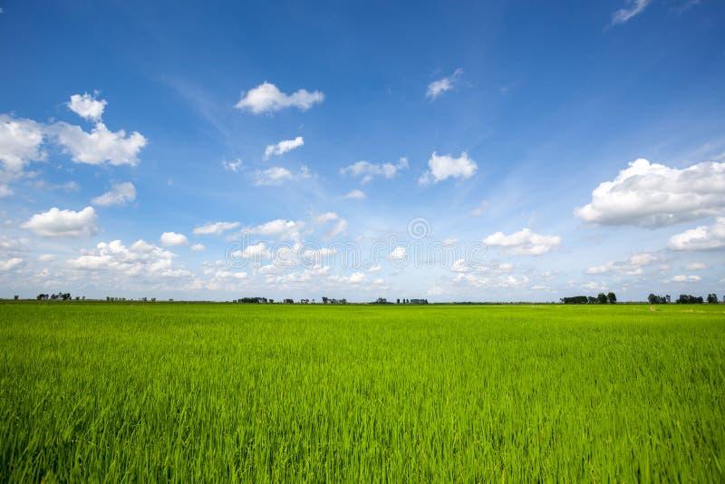 Blauwe bewolkte de hemelwolk van het padieveld groene gras stock afbeelding