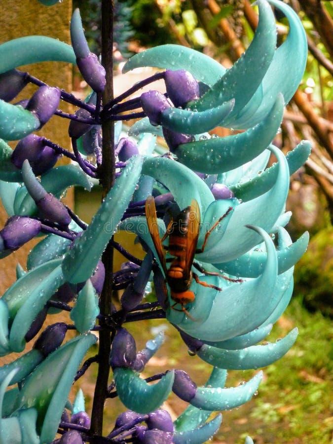 Blauwe bloem en wesp royalty-vrije stock fotografie
