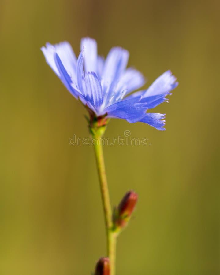 Blauwe bloem in het park stock foto