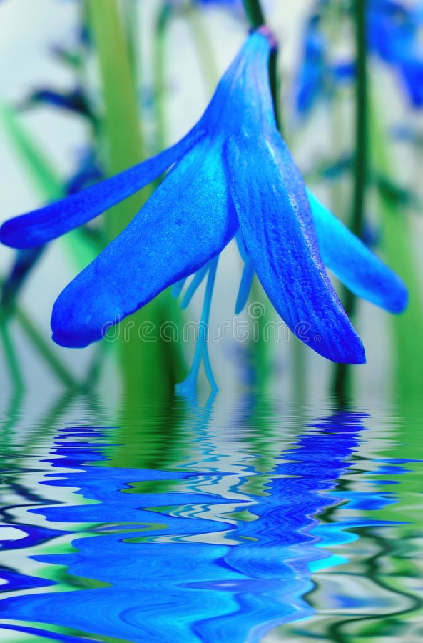 Blauwe bloembezinning in water