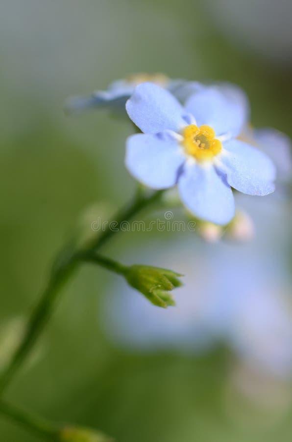 Blauwe bloemen in een macrobeeld op groene onscherpe achtergrond royalty-vrije stock foto