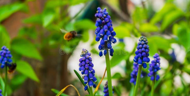Blauwe bloemen en een bij royalty-vrije stock foto