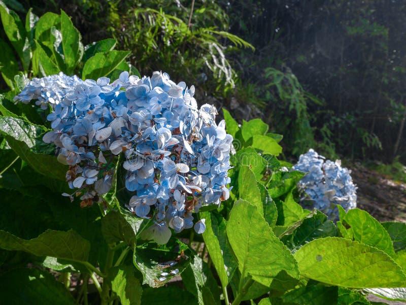 Blauwe bloemen in het bos royalty-vrije stock foto