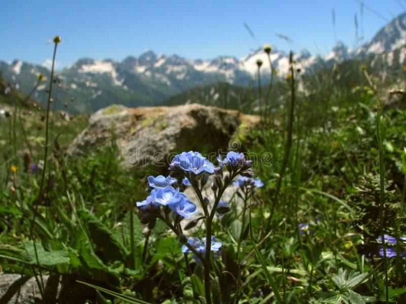 Blauwe bloemen op de bergachtergrond stock fotografie