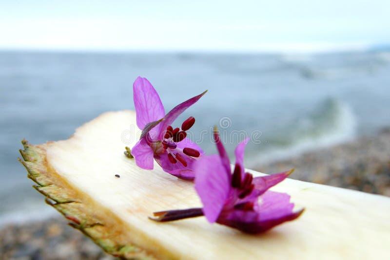Blauwe bloemen op een stuk van hout stock foto's