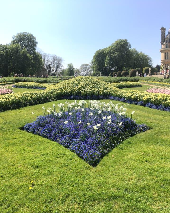 Blauwe bloemsquire in de tuinen royalty-vrije stock afbeelding