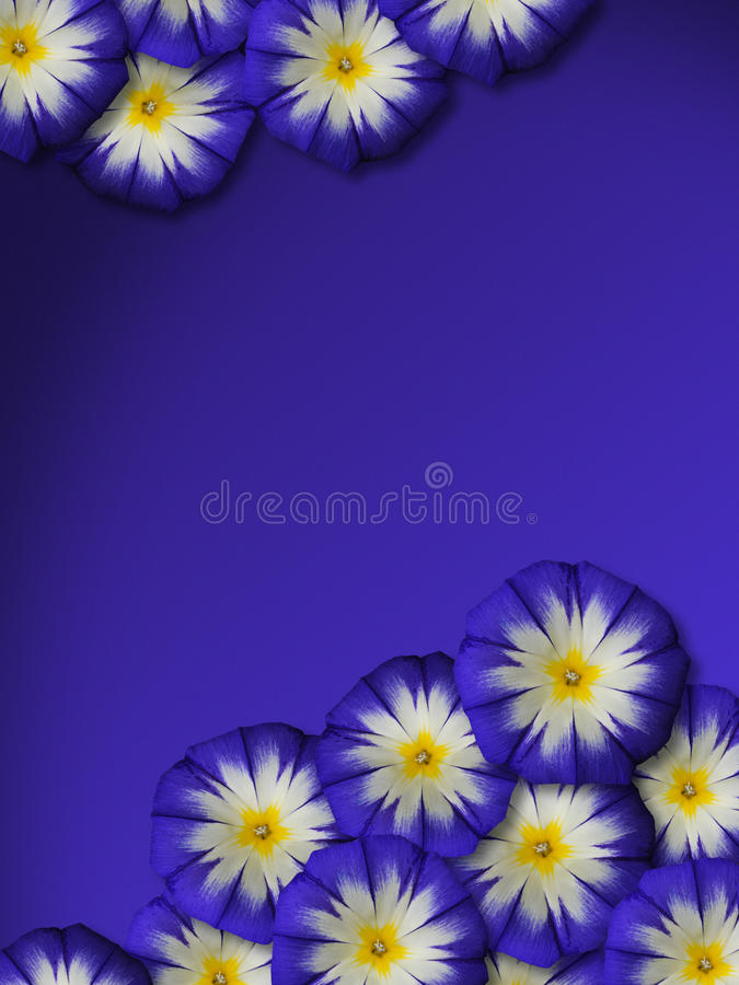 Blauwe bloesems met blauwe achtergrond stock foto