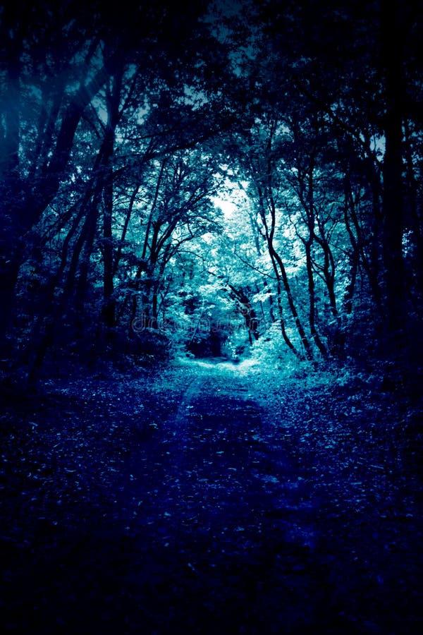 Blauwe bosweg royalty-vrije stock fotografie