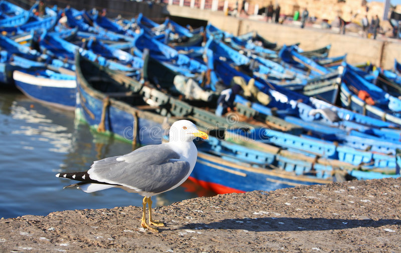Blauwe boten en eenzame zeemeeuw royalty-vrije stock foto's