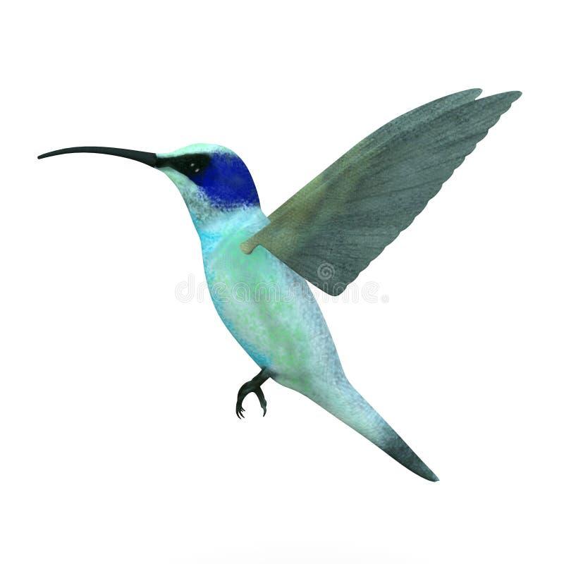 Blauwe colibrivogel vector illustratie