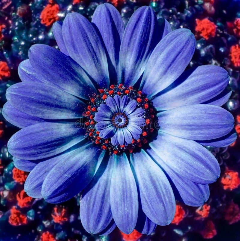 Blauwe de bloem spiraalvormige abstracte fractal van het kamillemadeliefje effect patroonachtergrond Het blauwe violette spiraalv royalty-vrije stock foto's