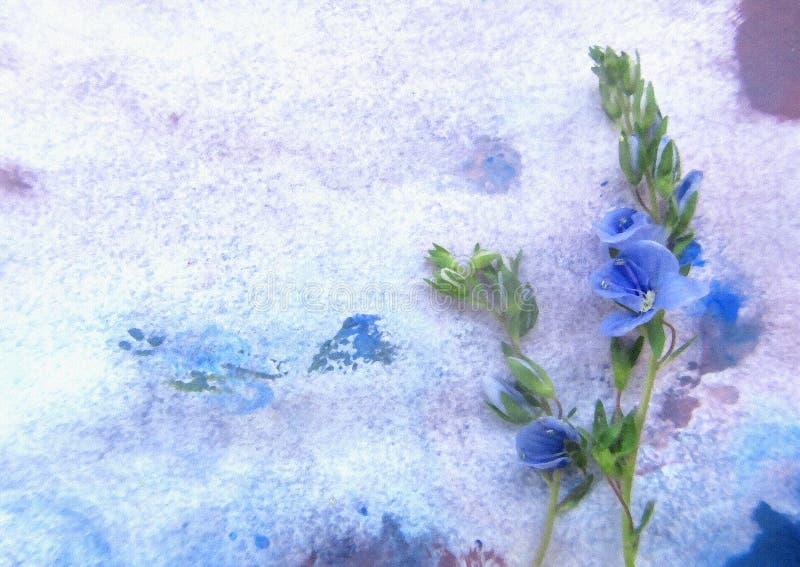 Blauwe de lentebloem op een waterverfachtergrond Bloemen op een sneeuw vector illustratie