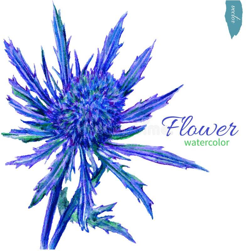 Blauwe die bloem, waterverfillustratie op witte achtergrond, Vectorhand getrokken illustratie wordt geïsoleerd Bloemen ontwerp? a stock illustratie
