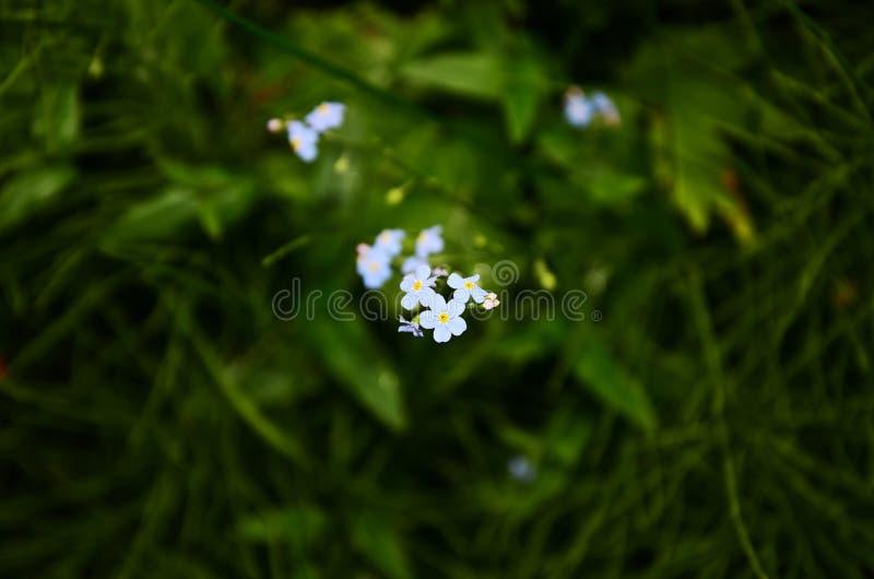 Blauwe die bloemen in centrum worden geconcentreerd stock foto's