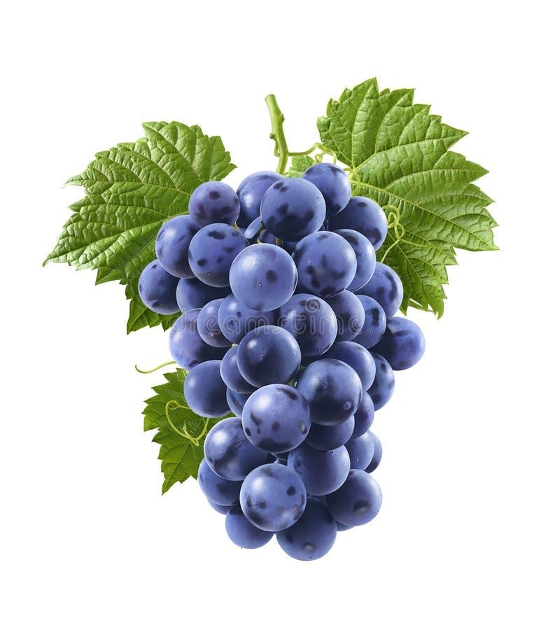 Blauwe die druiven op witte achtergrond worden geïsoleerd Verticale samenstelling stock foto
