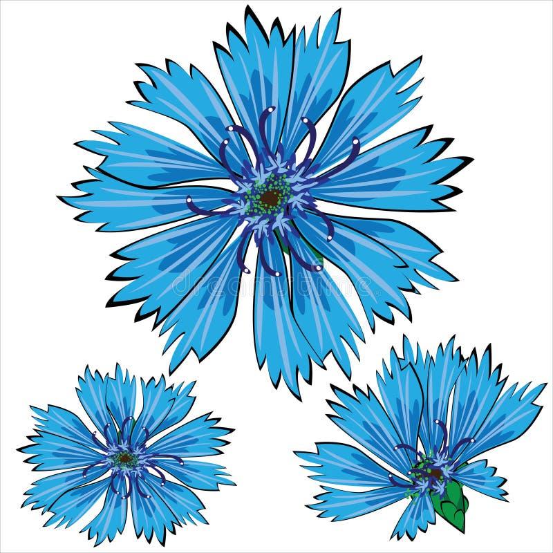 Blauwe die korenbloembloemen op wit worden geïsoleerd stock illustratie