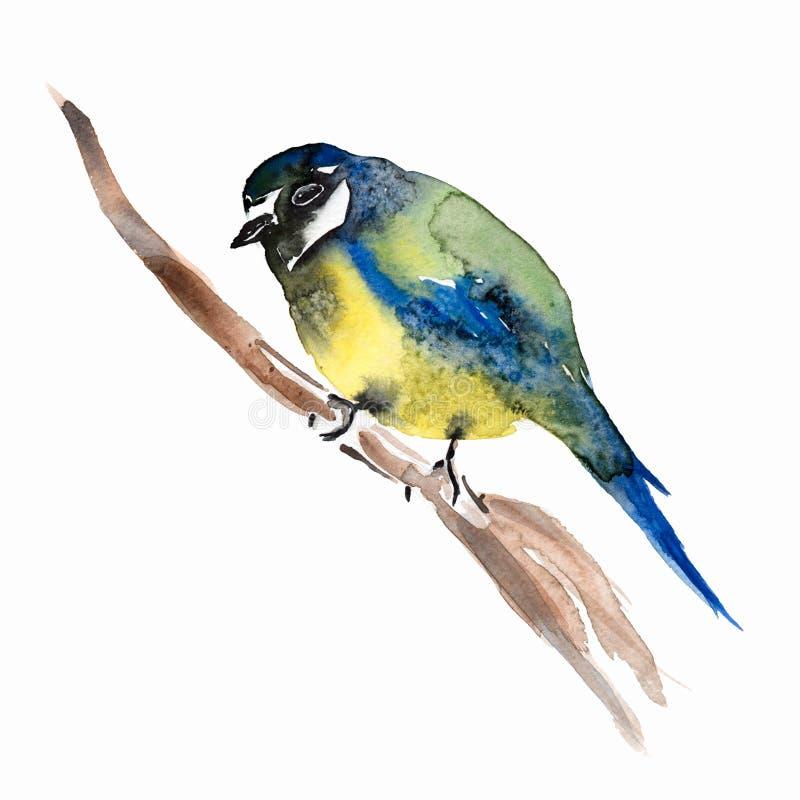 Blauwe die mees, op witte achtergrond wordt geïsoleerd Het schilderen op zijde De vogel van de meeswaterverf op witte achtergrond stock illustratie