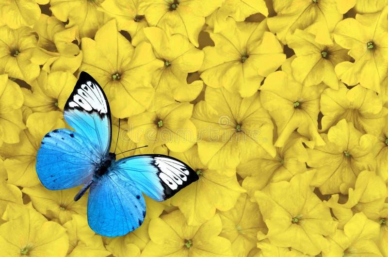 Blauwe die vlinder op gele achtergrond wordt geïsoleerd Mooi insect royalty-vrije stock afbeeldingen