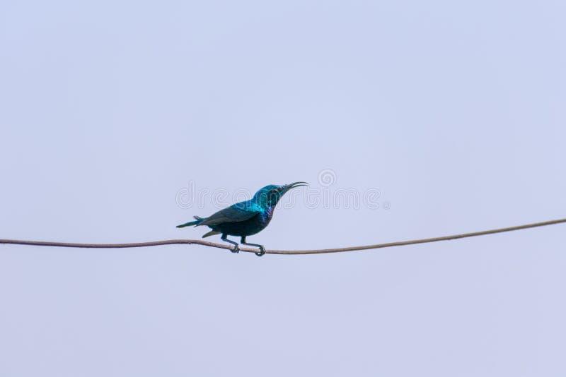 Blauwe die vogel op een draad wordt gezeten royalty-vrije stock foto