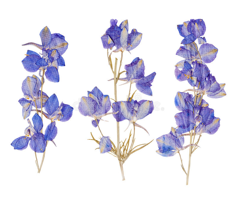Blauwe droge gedrukte bloemen stock fotografie