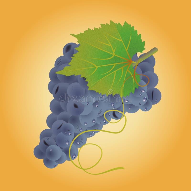 Blauwe druif vector illustratie