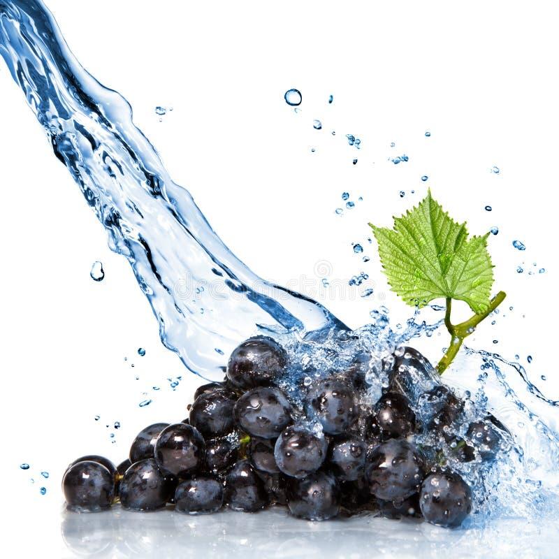 Blauwe druif met water royalty-vrije stock foto