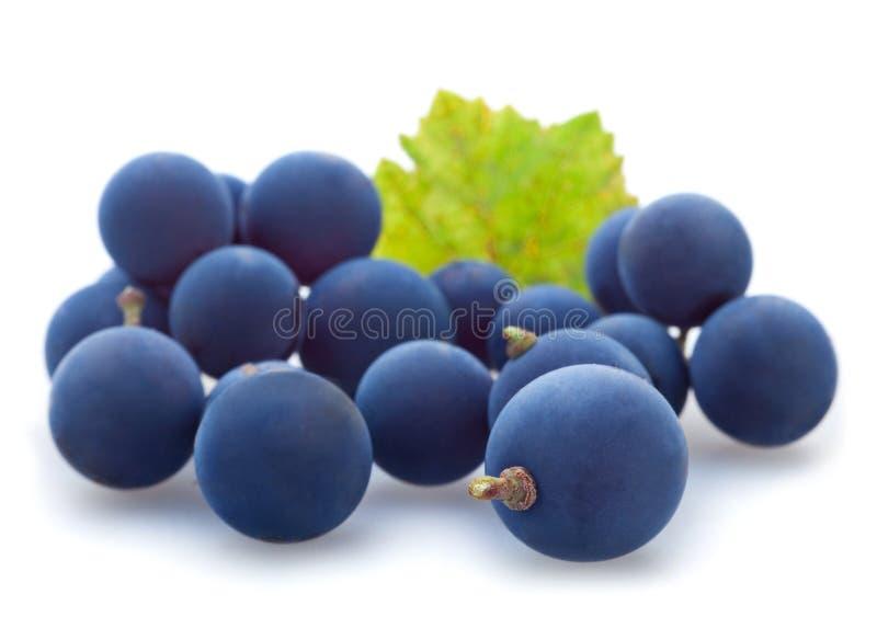 Blauwe druivenbes royalty-vrije stock afbeeldingen
