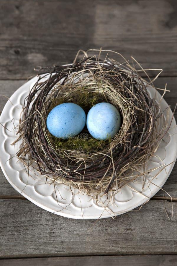 Blauwe eieren in nest op plaat stock afbeelding