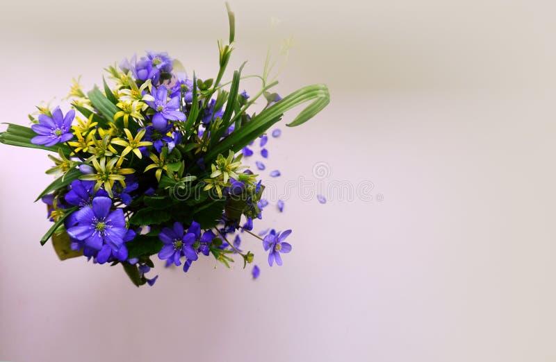 Blauwe en gele de lentebloemen op een witte achtergrond stock afbeeldingen