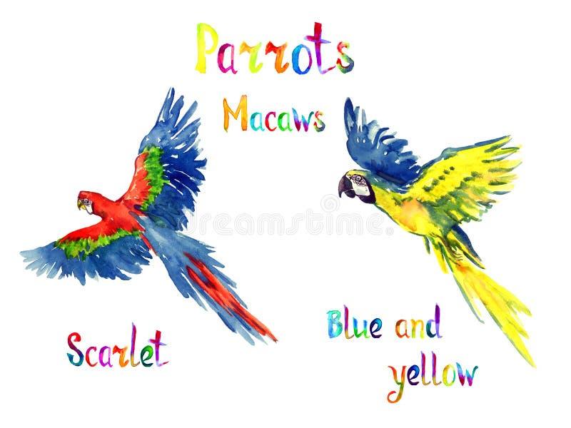 Blauwe en gele en Scharlaken ara het vliegen reeks royalty-vrije illustratie