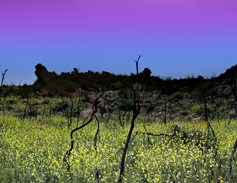 Blauwe en gele schemering royalty-vrije stock foto