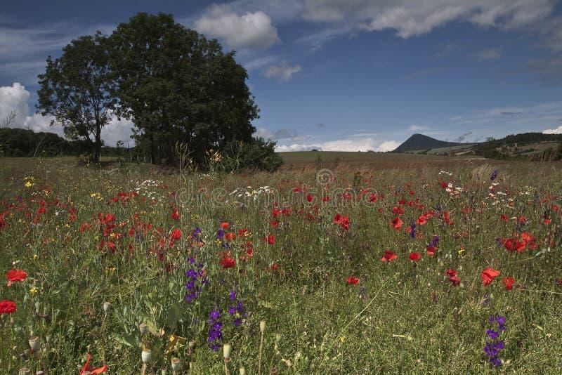 Blauwe en rode bloemen op gebied royalty-vrije stock afbeeldingen