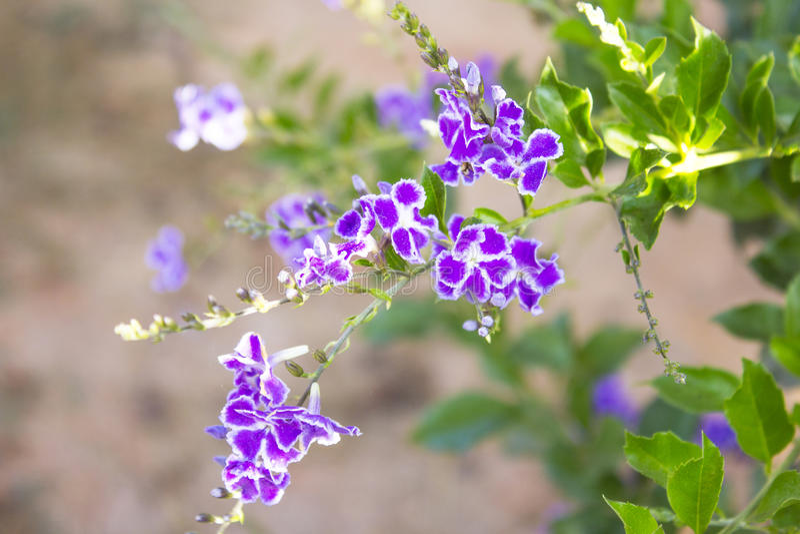 Blauwe en Witte Bloemen stock fotografie