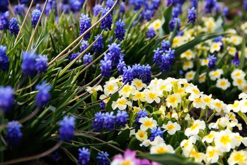 Blauwe en witte bloemen die dichtbij het water groeien stock fotografie