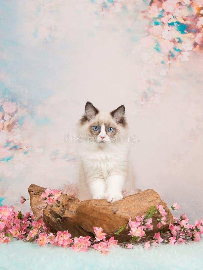Blauwe eyed babykat op het romantische plaatsen stock fotografie