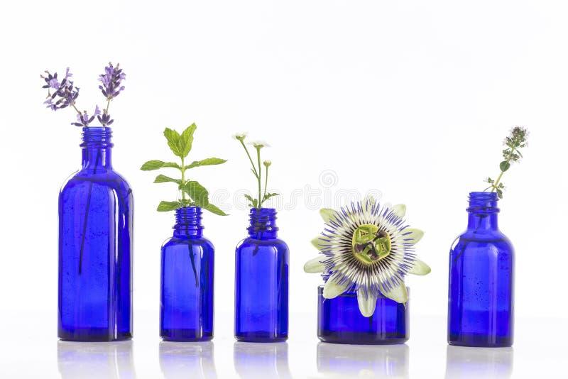 Blauwe Flessen etherische olie met feshkruiden royalty-vrije stock foto