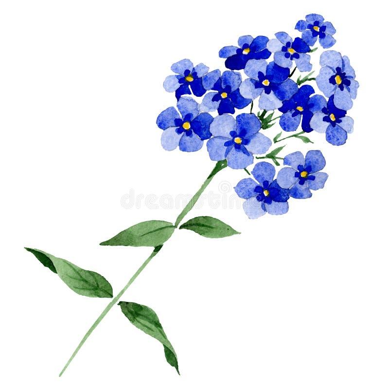 Blauwe floxbloemen met groene bladeren Het geïsoleerde element van de floxillustratie Waterverf achtergrondillustratiereeks royalty-vrije illustratie