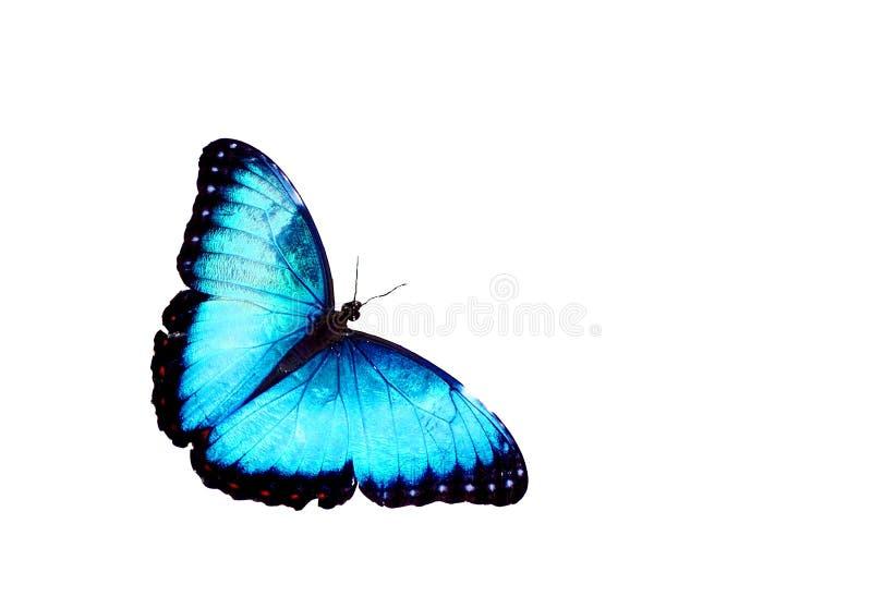 Blauwe geïsoleerden vlinder stock afbeelding
