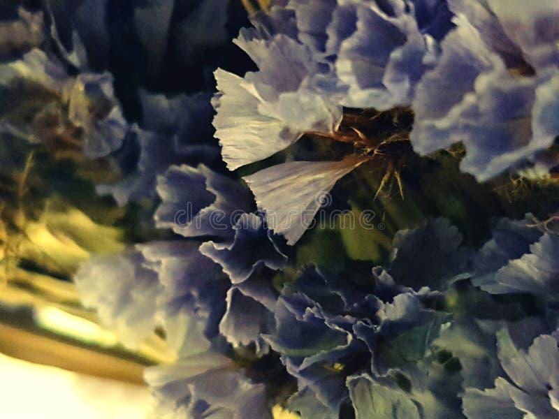 Blauwe Hartstocht stock foto's