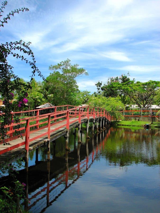 Blauwe hemel bij het Landbouwbedrijf van de Krokodil Miri, Borneo, Maleisië stock foto's