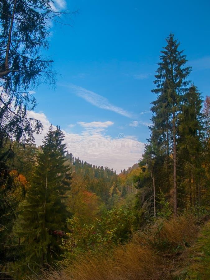 Blauwe Hemel in een Bos in Beieren tijdens de Herfst royalty-vrije stock afbeelding