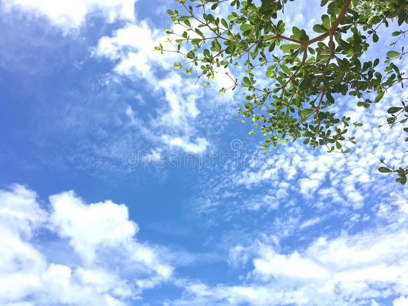 Blauwe hemel en boom stock fotografie