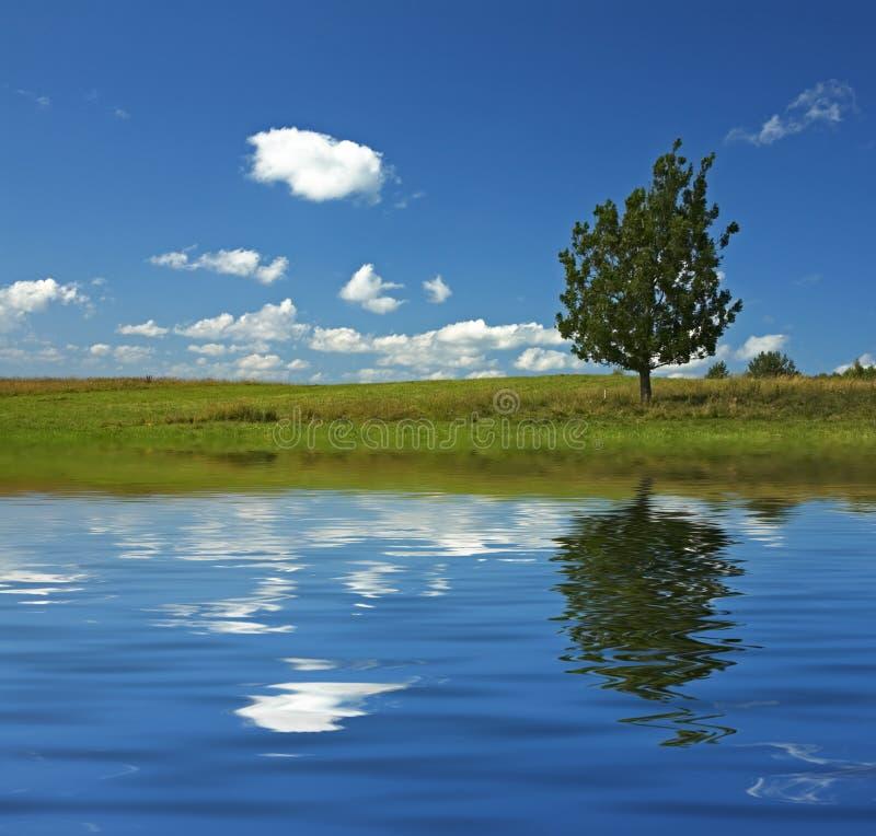 Blauwe hemel en boom op het gebied royalty-vrije stock foto