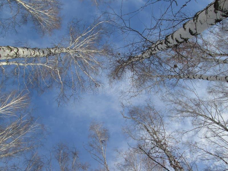 Blauwe hemel en boombovenkanten royalty-vrije stock foto