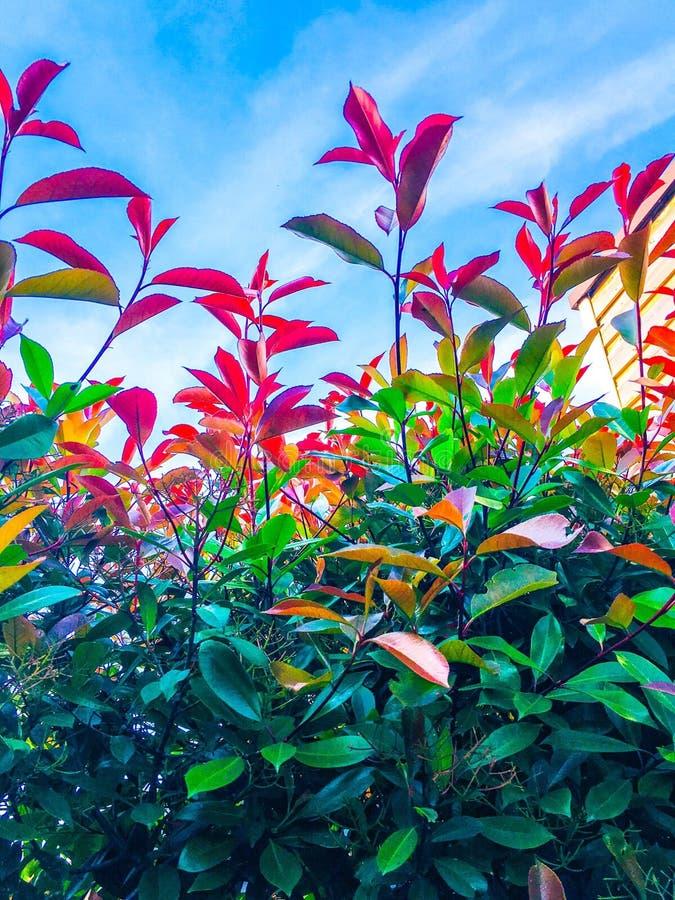 Blauwe hemel en colorfull bladeren royalty-vrije stock foto