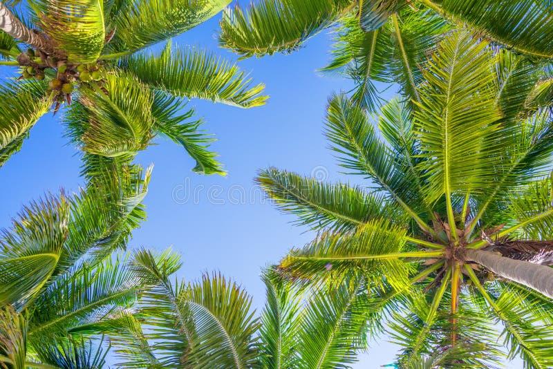 Blauwe hemel en palmen van onderaan stock fotografie